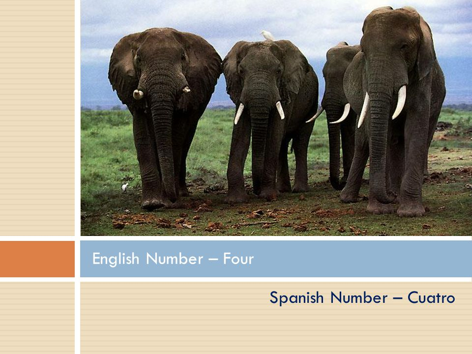 Spanish Number – Tres English Number – Three