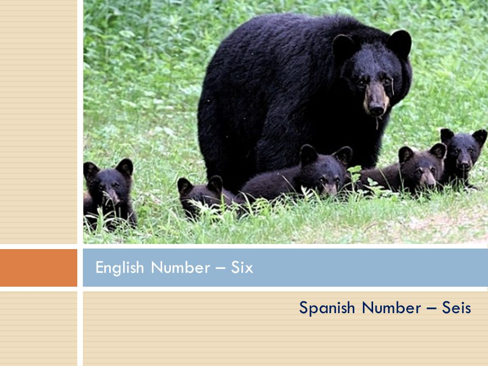 Spanish Number - Cinco English Number – Five