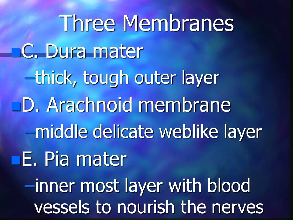 Three Membranes n C. Dura mater –thick, tough outer layer n D.