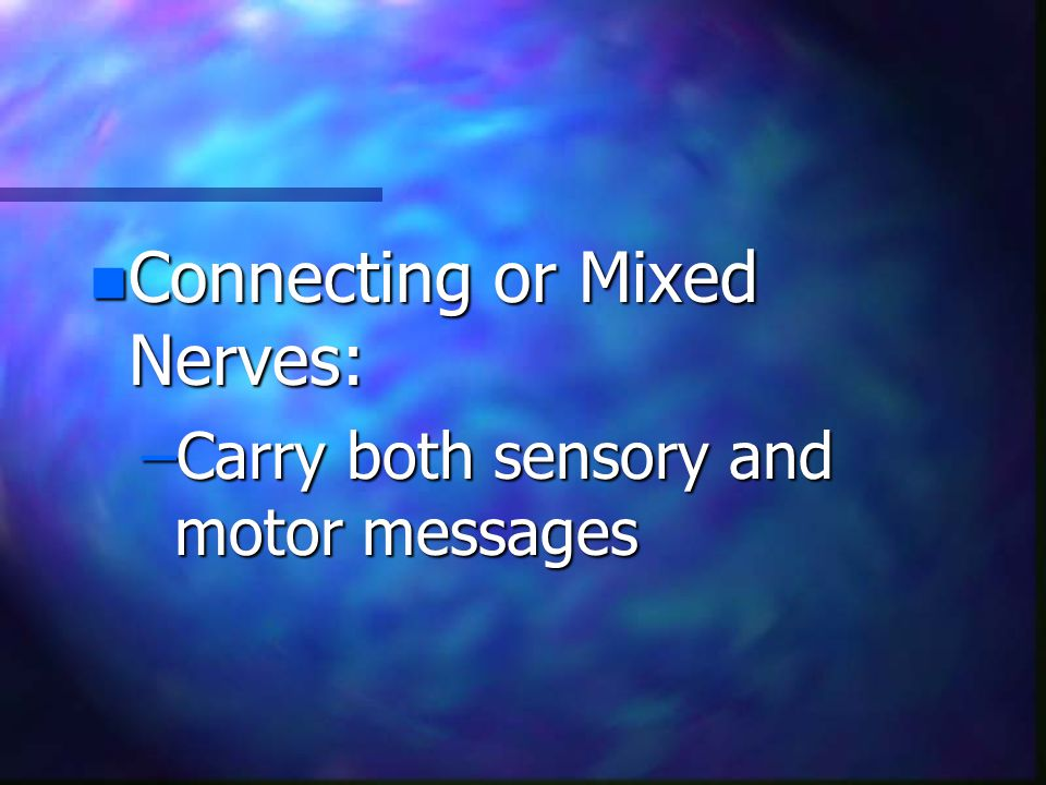 n Connecting or Mixed Nerves: –Carry both sensory and motor messages