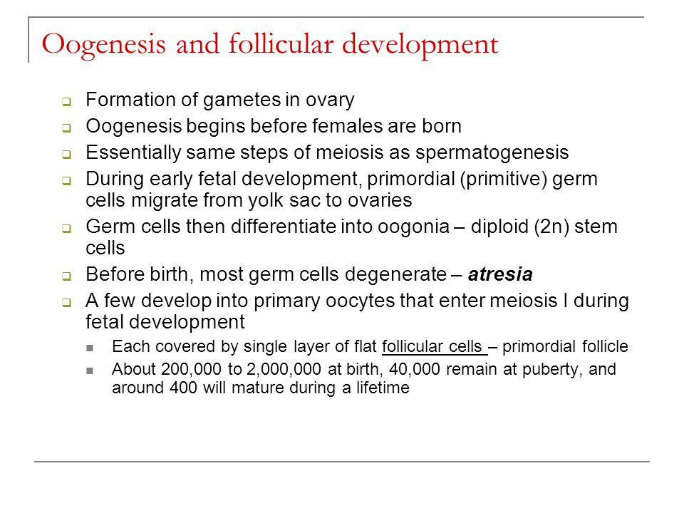 Oogenesis Slide Oogenesis and follicular
