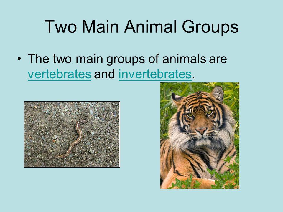 of animals are vertebr...