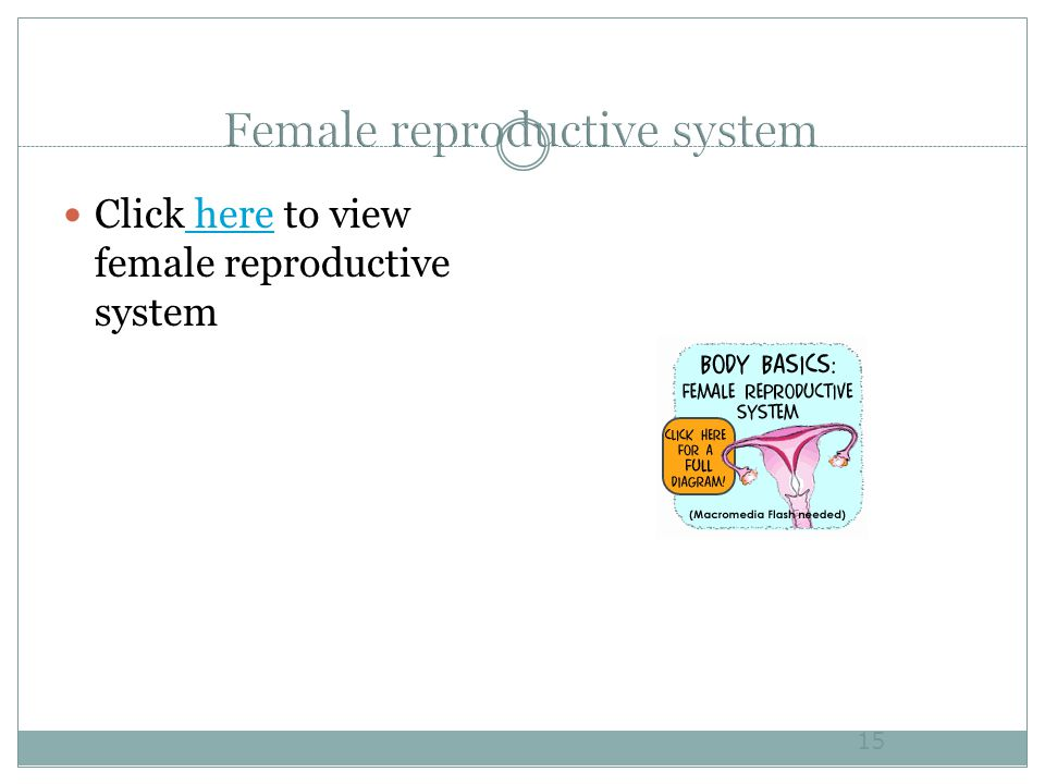 Click here to view female reproductive system here 15