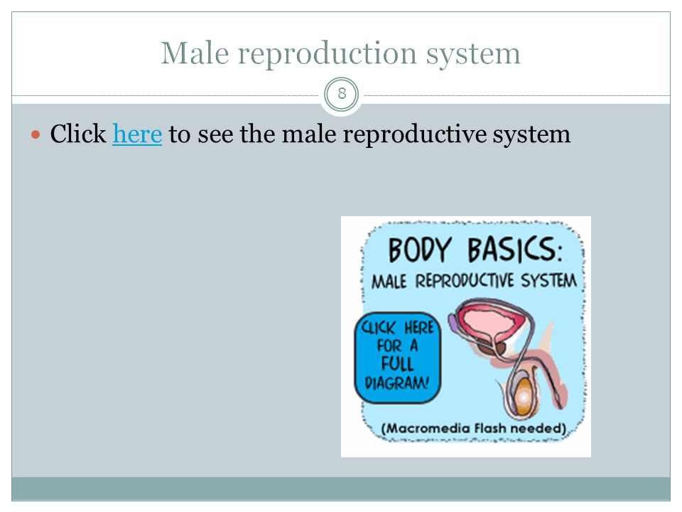 8 Click here to see the male reproductive systemhere