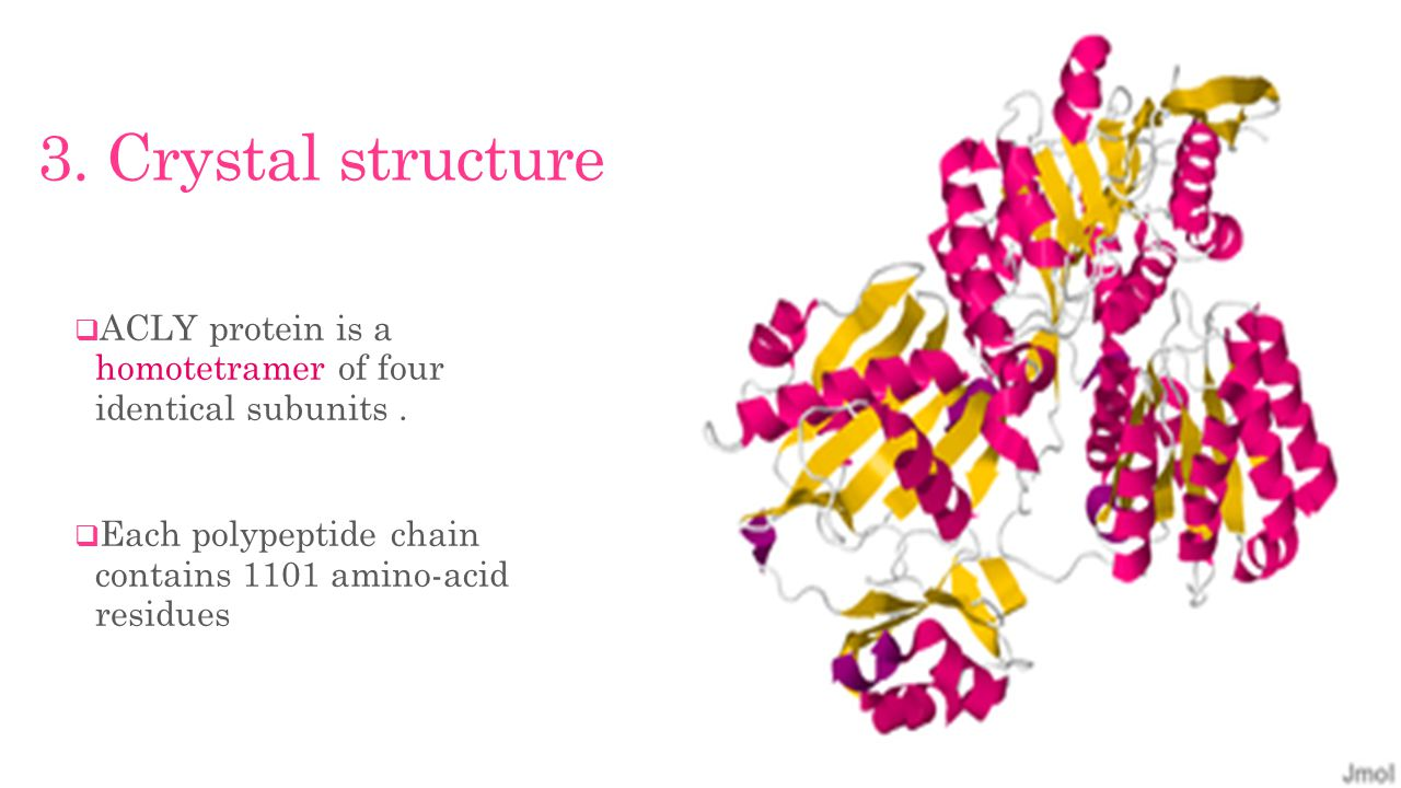 3. Crystal structure  ACLY protein is a homotetramer of four identical subunits.
