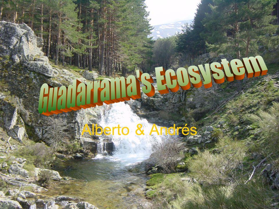 Alberto & Andrés