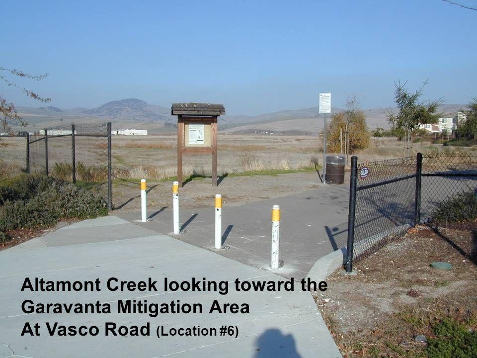 Altamont Creek looking toward the Garavanta Mitigation Area At Vasco Road (Location #6)