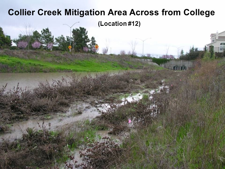 Collier Creek Mitigation Area Across from College (Location #12)