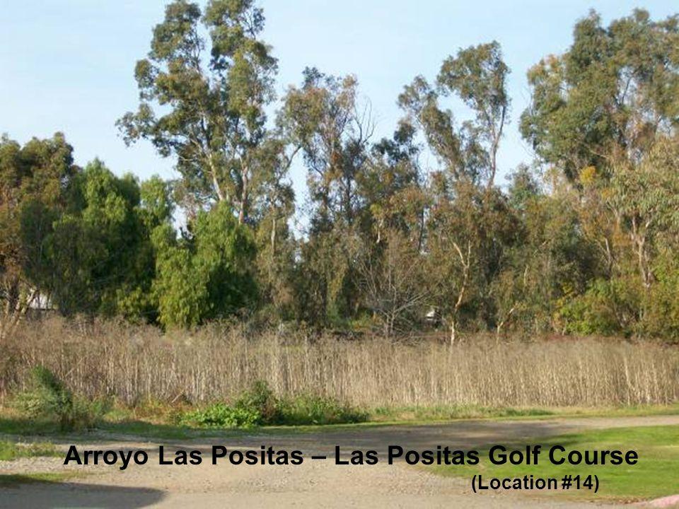 Sediment along the Arroyo Las Positas and Arroyo Mocho Arroyo Las Positas – Las Positas Golf Course (Location #14)