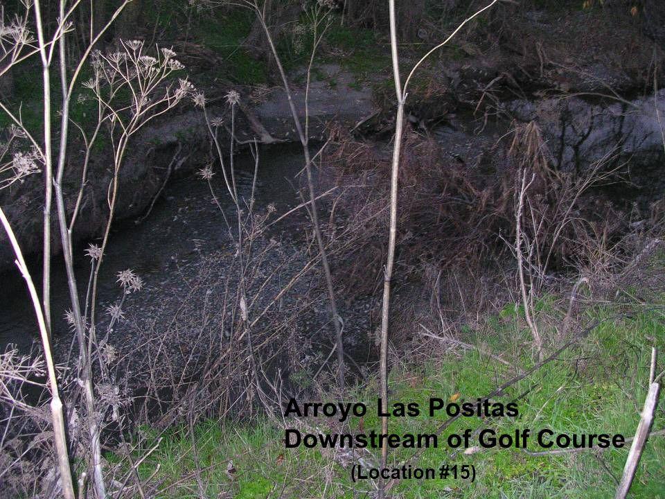 Arroyo Las Positas Downstream of Golf Course (Location #15)