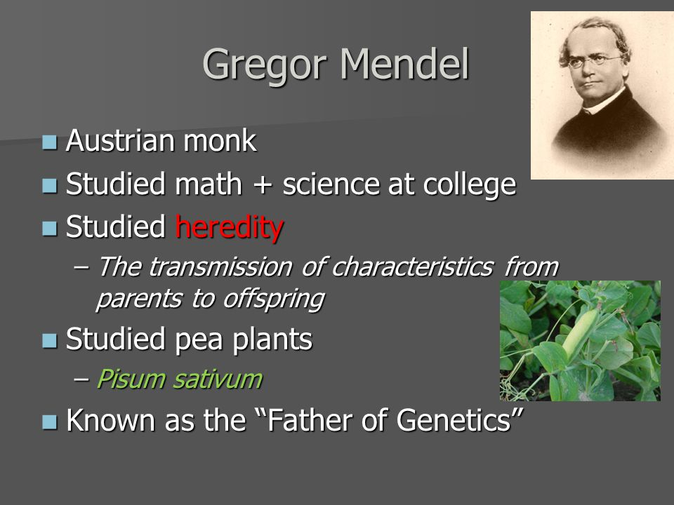 Gregor Mendel Austrian monk Austrian monk Studied math + science at college Studied math + science at college Studied heredity Studied heredity –The transmission of characteristics from parents to offspring Studied pea plants Studied pea plants –Pisum sativum Known as the Father of Genetics Known as the Father of Genetics