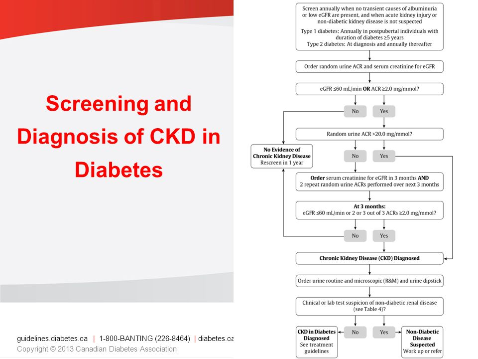 guidelines.diabetes.ca | BANTING ( ) | diabetes.ca Copyright © 2013 Canadian Diabetes Association Screening and Diagnosis of CKD in Diabetes