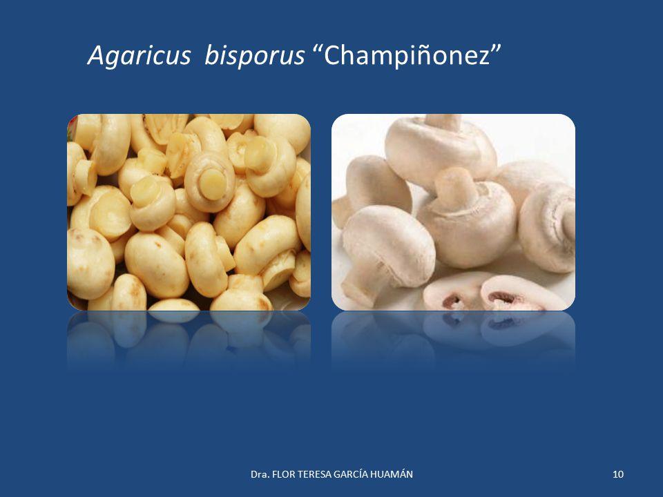 """Agaricus bisporus """"Champiñonez"""" 10Dra. FLOR TERESA GARCÍA HUAMÁN"""