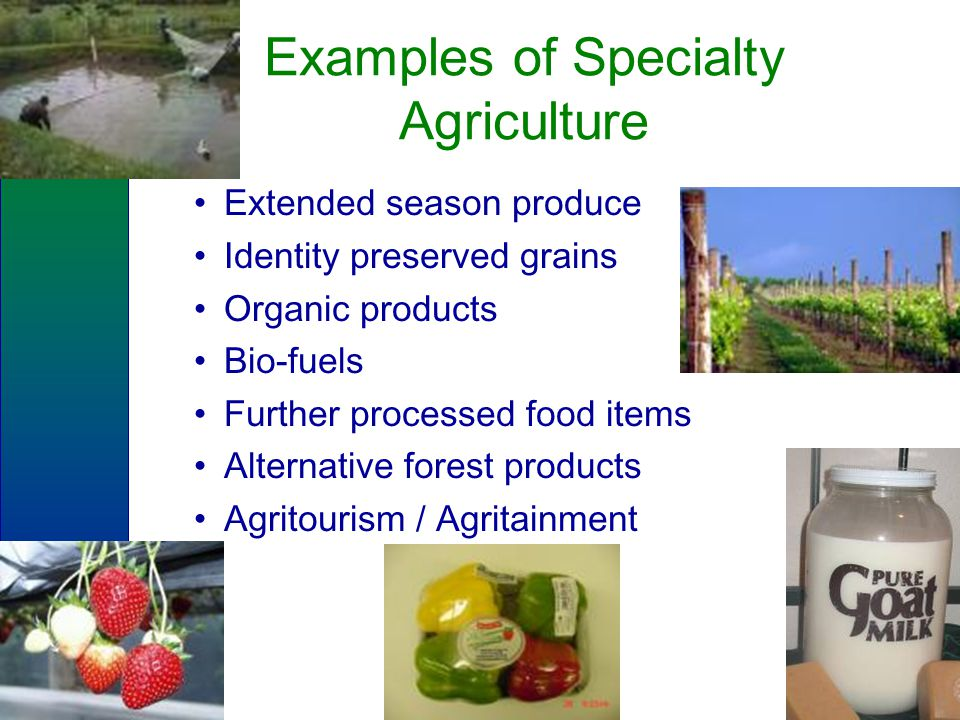 Examples of Specialty Agriculture Extended season produce Identity preserved grains Organic products Bio-fuels Further processed food items Alternative forest products Agritourism / Agritainment