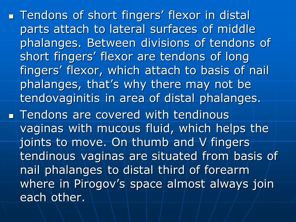 Tendons of short fingers' flexor in distal parts attach to lateral surfaces of middle phalanges.