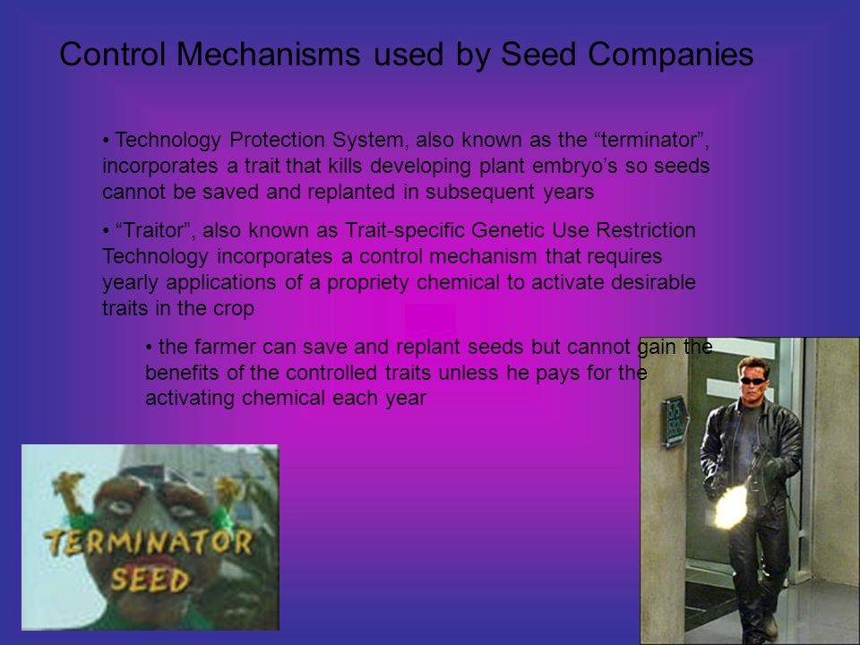 Technology Protection System, also known as the terminator , incorporates a trait that kills developing plant embryo's so seeds cannot be saved and replanted in subsequent years Traitor , also known as Trait-specific Genetic Use Restriction Technology incorporates a control mechanism that requires yearly applications of a propriety chemical to activate desirable traits in the crop the farmer can save and replant seeds but cannot gain the benefits of the controlled traits unless he pays for the activating chemical each year Control Mechanisms used by Seed Companies