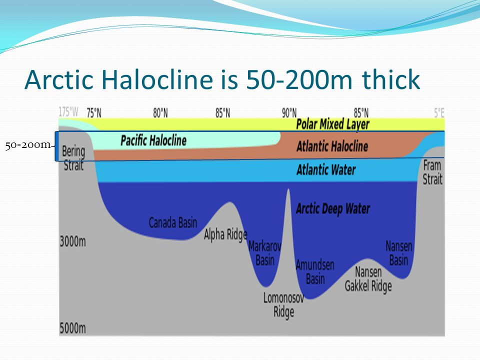 Arctic Halocline is m thick m