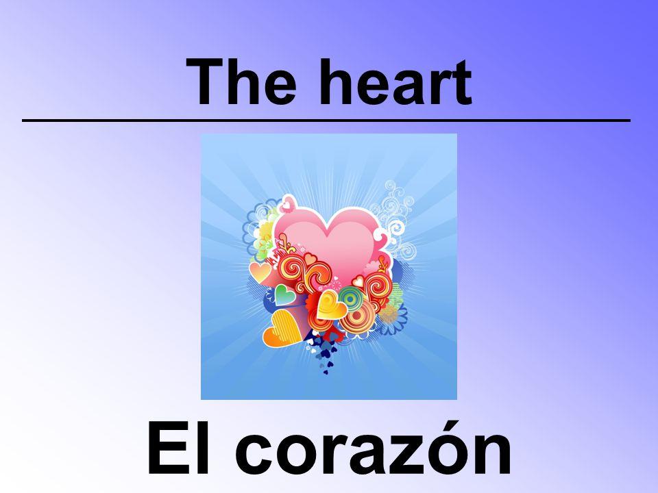 The heart El corazón
