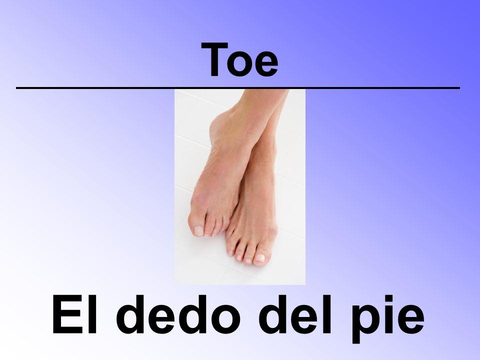 Toe El dedo del pie