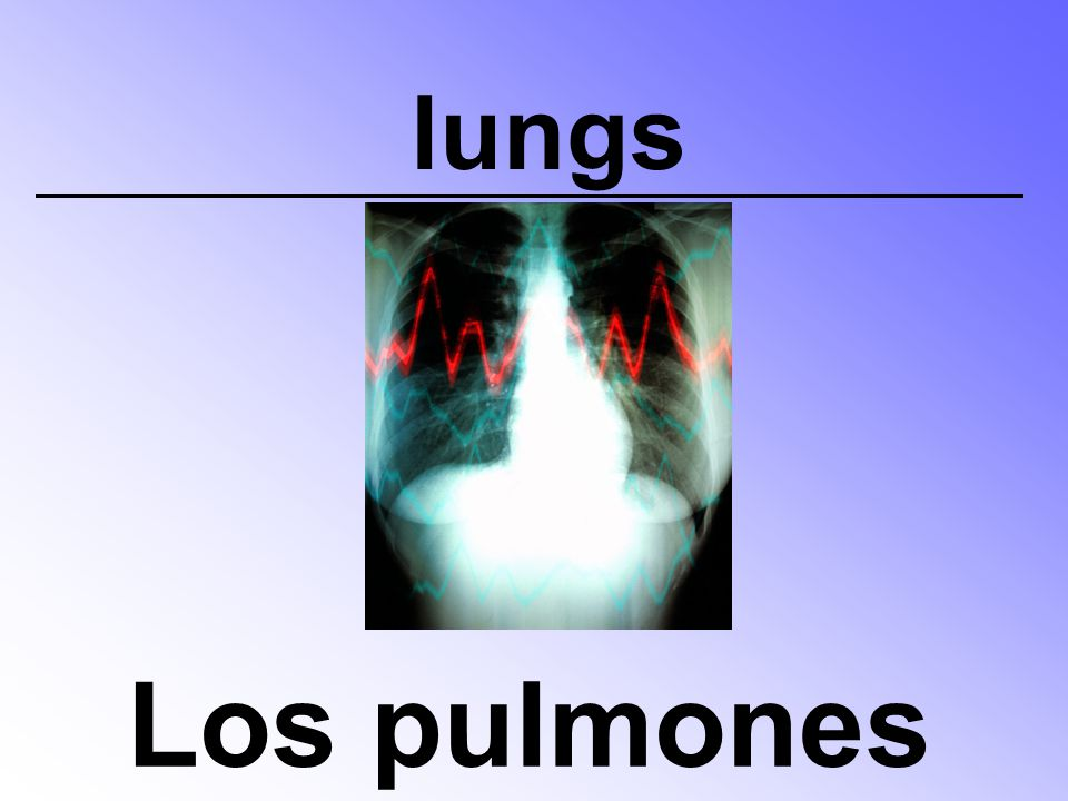 lungs Los pulmones
