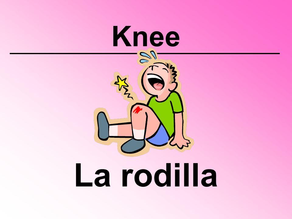 Knee La rodilla
