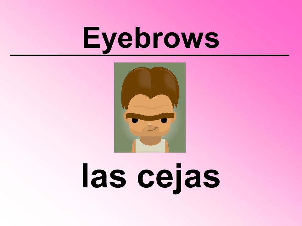 Eyebrows las cejas