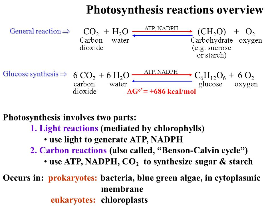 1.How are plants able to convert light energy into energy that can be utilized by both themselves and heterotrophs.