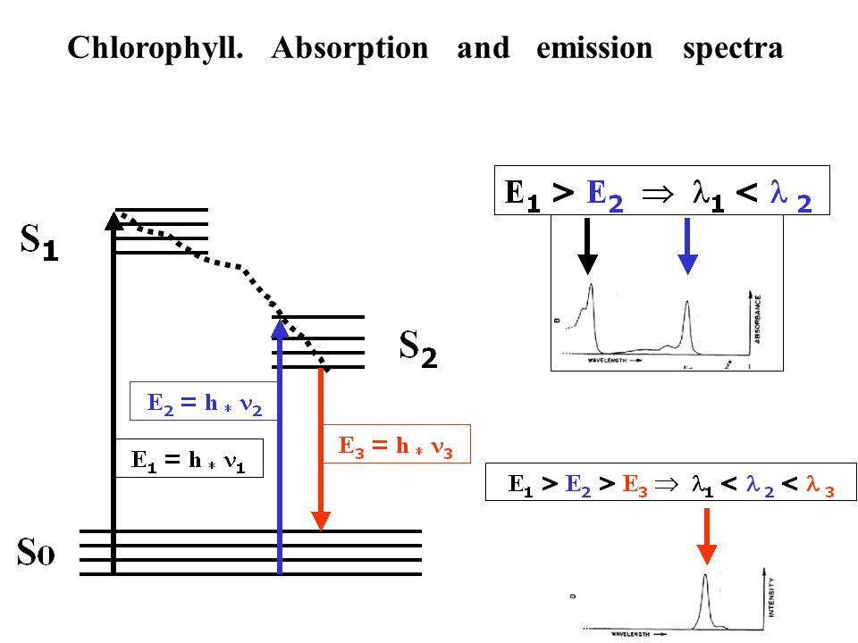 Absorption and emission spectra of biphenyl
