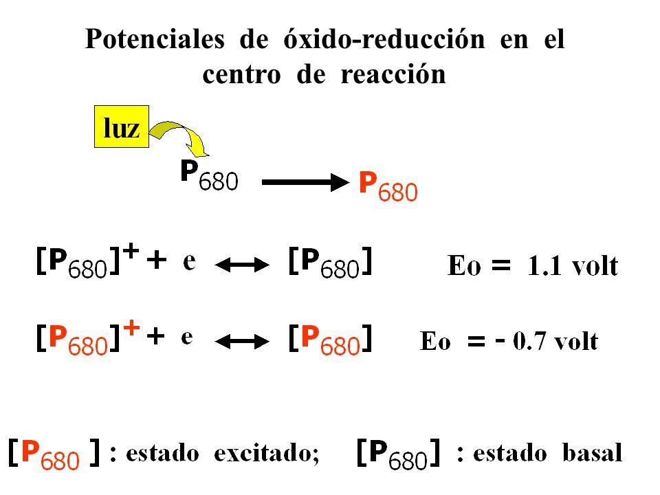 LUZ P  P * P+P+ A A-A- D D+D+