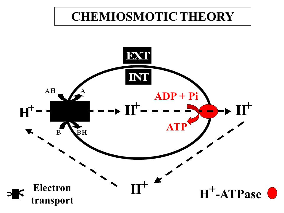 Non-cyclic photophosphorylation when PSII is inhibited