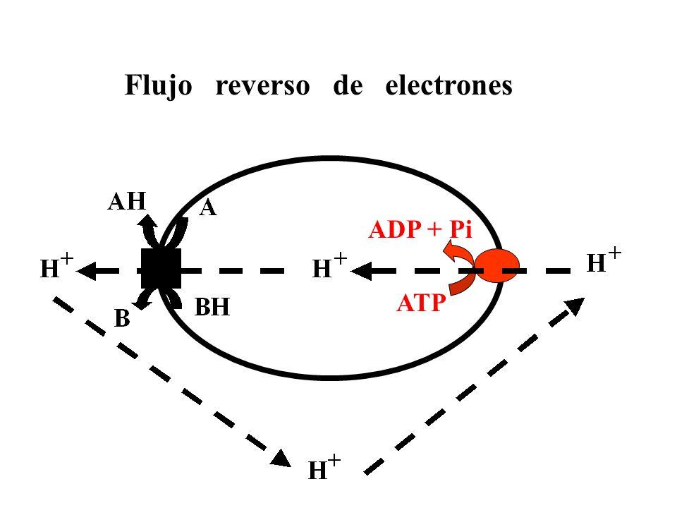 Cyclic photophosphorylation