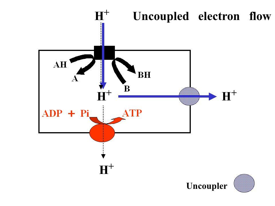 Uncoupler Uncoupled electron flow