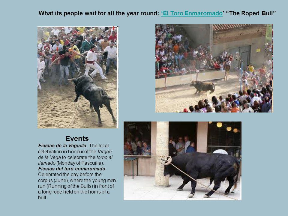 "What its people wait for all the year round: 'El Toro Enmaromado' ""The Roped Bull""'El Toro Enmaromado Events Fiestas de la Veguilla. The local celebra"