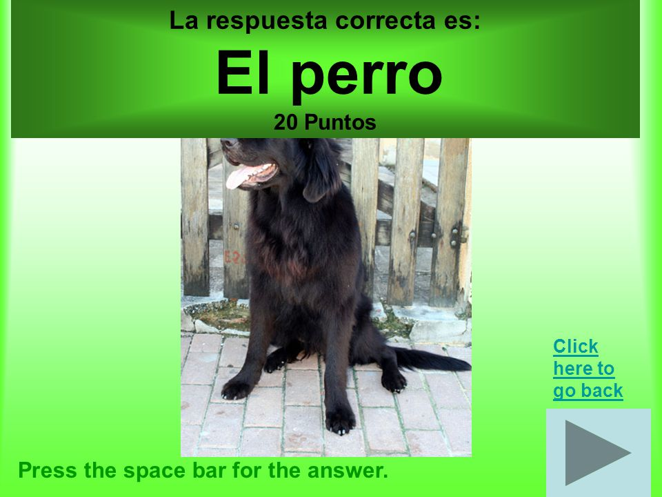 Animales por 20 puntos Press the space bar for the answer.