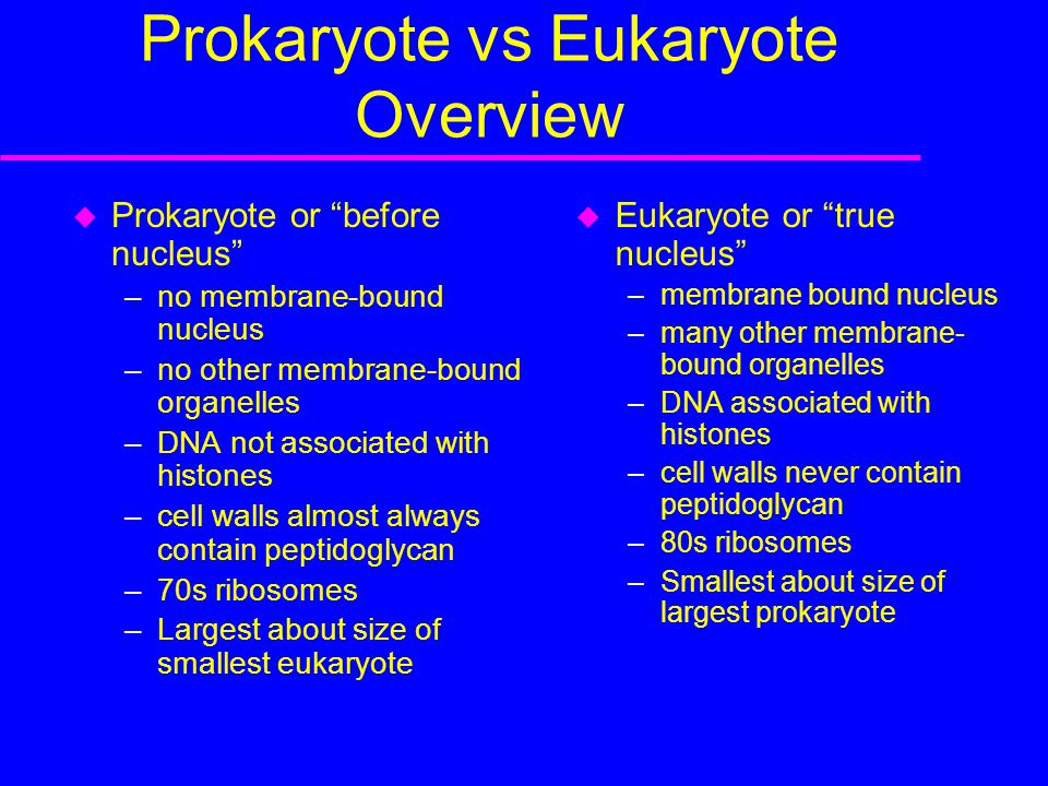 Prokaryote vs Eukaryote Overview  Prokaryote or before nucleus –no membrane-bound nucleus –no other membrane-bound organelles –DNA not associated with histones –cell walls almost always contain peptidoglycan –70s ribosomes –Largest about size of smallest eukaryote  Eukaryote or true nucleus –membrane bound nucleus –many other membrane- bound organelles –DNA associated with histones –cell walls never contain peptidoglycan –80s ribosomes –Smallest about size of largest prokaryote