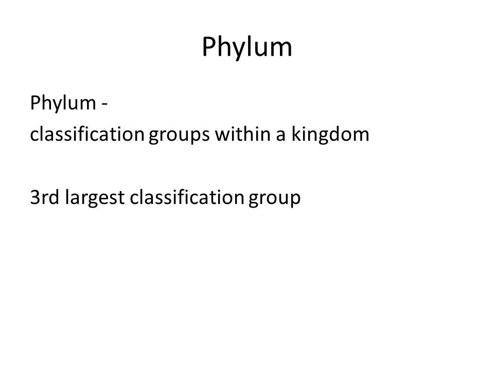 Phylum Phylum - classification groups within a kingdom 3rd largest classification group