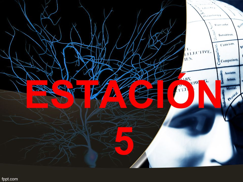 ESTACIÓN 5