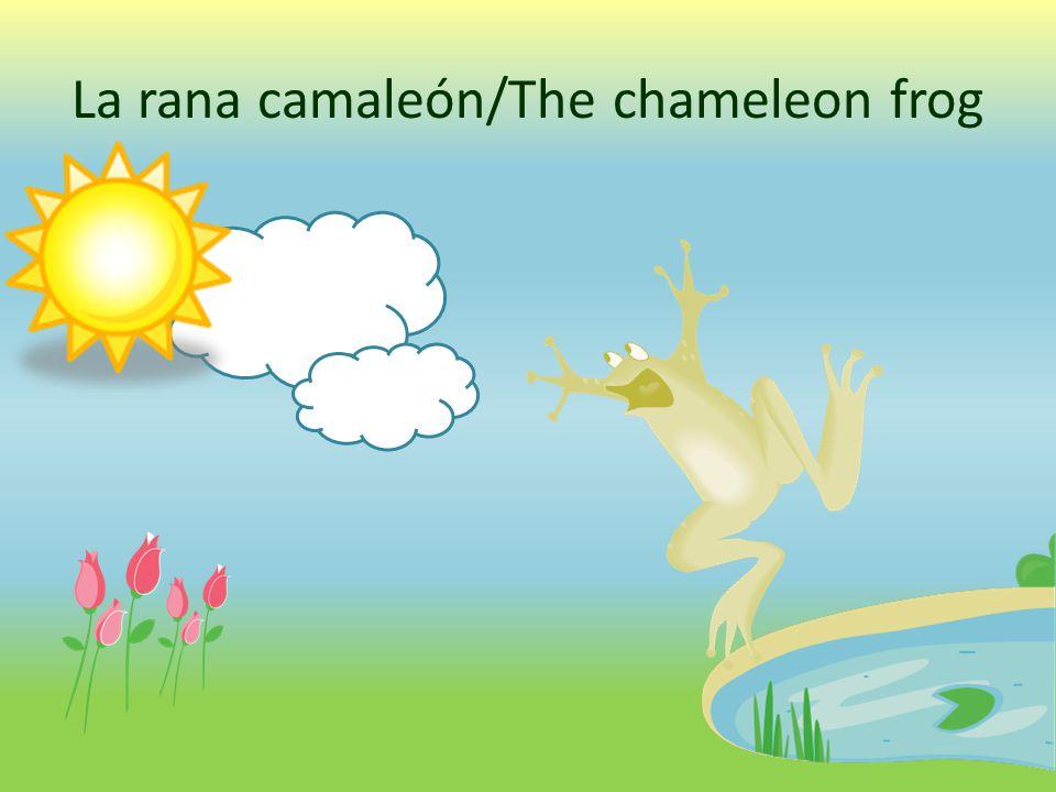 La rana camaleón/The chameleon frog