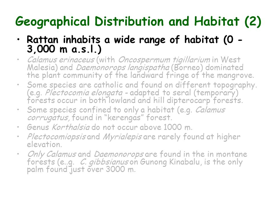 Geographical Distribution and Habitat (2) Rattan inhabits a wide range of habitat (0 - 3,000 m a.s.l.) Calamus erinaceus (with Oncospermum tigillarium in West Malesia) and Daemonorops langispatha (Borneo) dominated the plant community of the landward fringe of the mangrove.