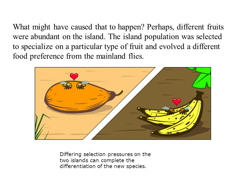 What might have caused that to happen. Perhaps, different fruits were abundant on the island.