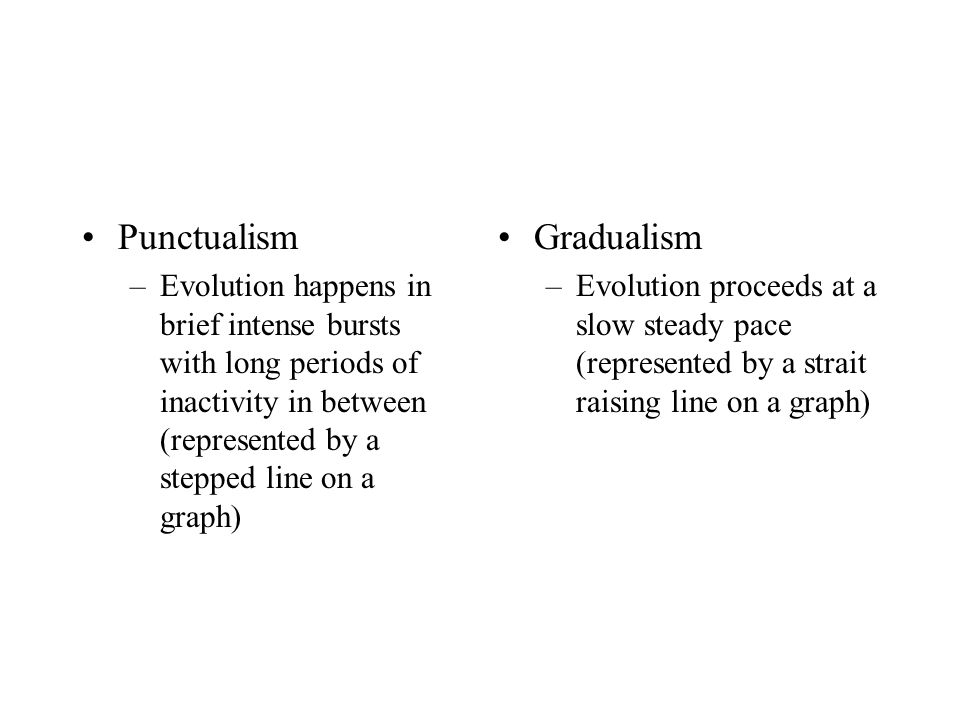 Punctualism –Evolution happens in brief intense bursts with long periods of inactivity in between (represented by a stepped line on a graph) Gradualism –Evolution proceeds at a slow steady pace (represented by a strait raising line on a graph)