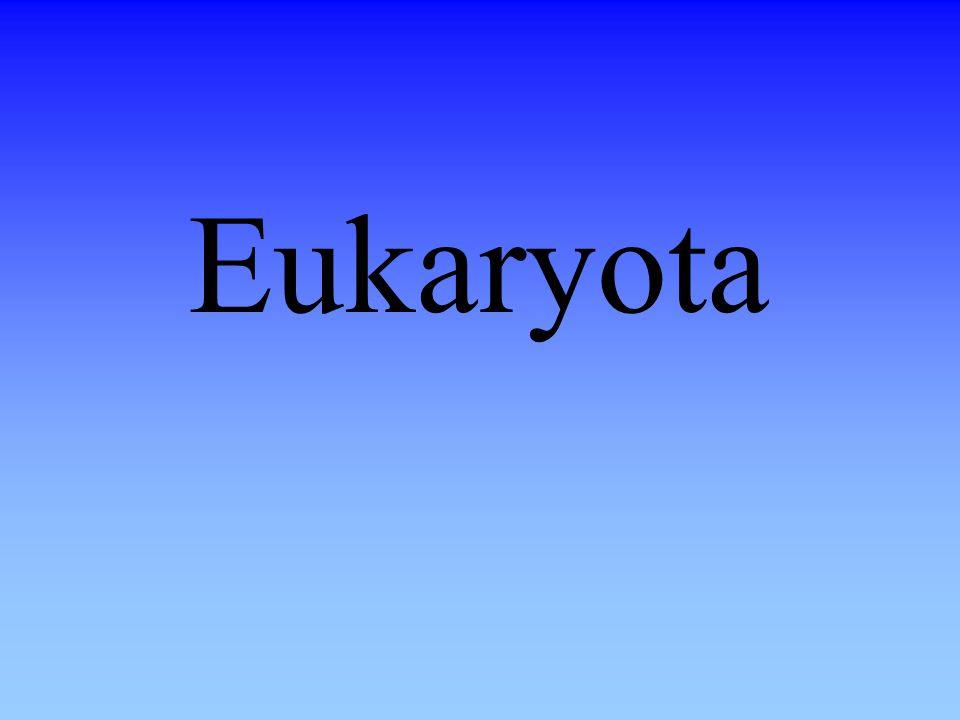 Eukaryota