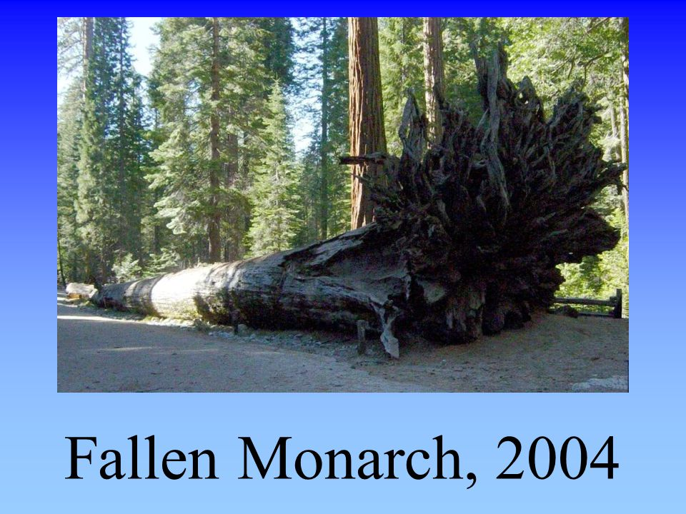 Fallen Monarch, 2004