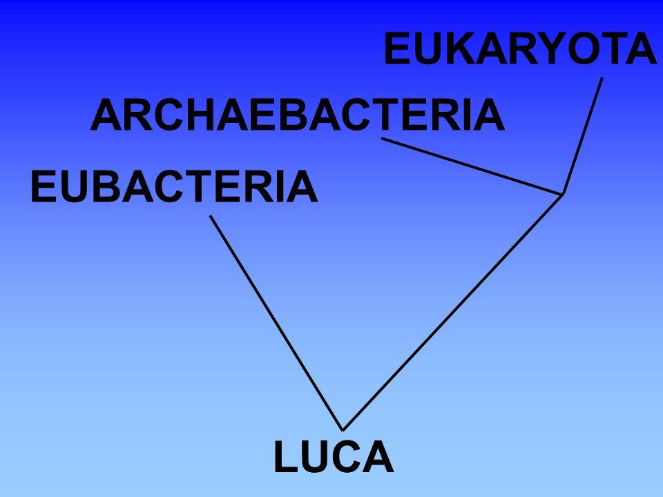 LUCA EUBACTERIA ARCHAEBACTERIA EUKARYOTA