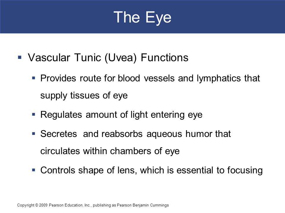 Copyright © 2009 Pearson Education, Inc., publishing as Pearson Benjamin Cummings The Eye  Vascular Tunic (Uvea) Functions  Provides route for blood vessels and lymphatics that supply tissues of eye  Regulates amount of light entering eye  Secretes and reabsorbs aqueous humor that circulates within chambers of eye  Controls shape of lens, which is essential to focusing