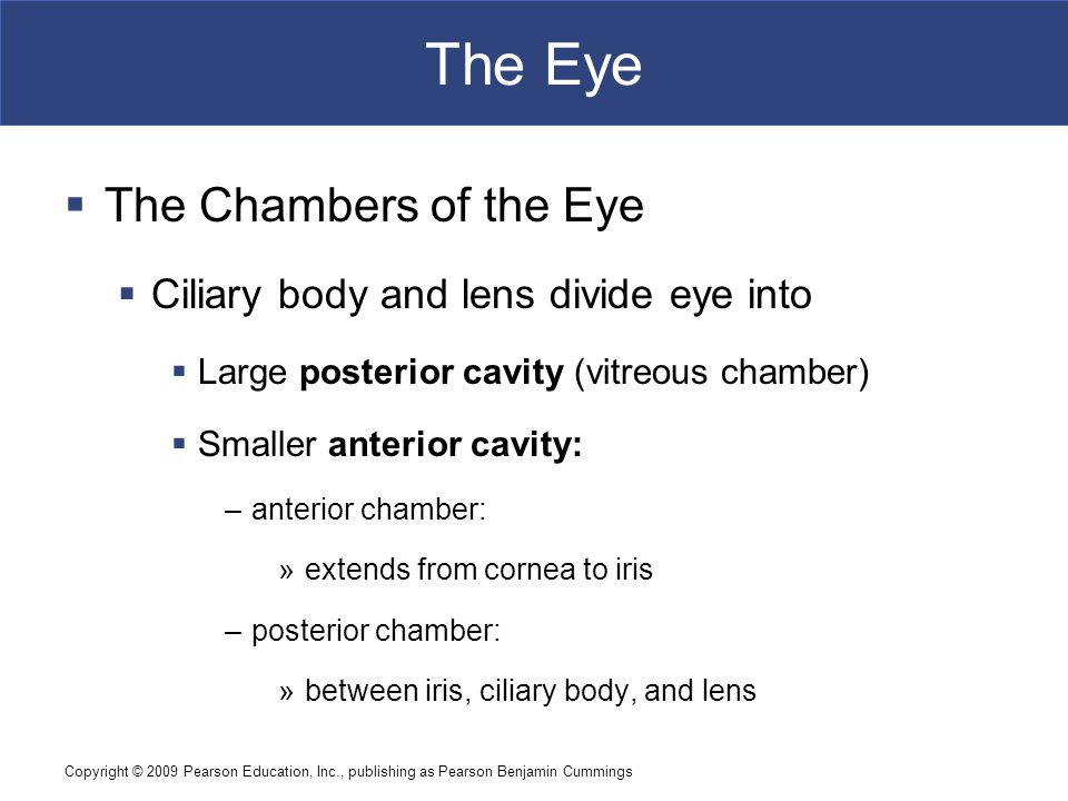 Copyright © 2009 Pearson Education, Inc., publishing as Pearson Benjamin Cummings The Eye  The Chambers of the Eye  Ciliary body and lens divide eye into  Large posterior cavity (vitreous chamber)  Smaller anterior cavity: –anterior chamber: »extends from cornea to iris –posterior chamber: »between iris, ciliary body, and lens