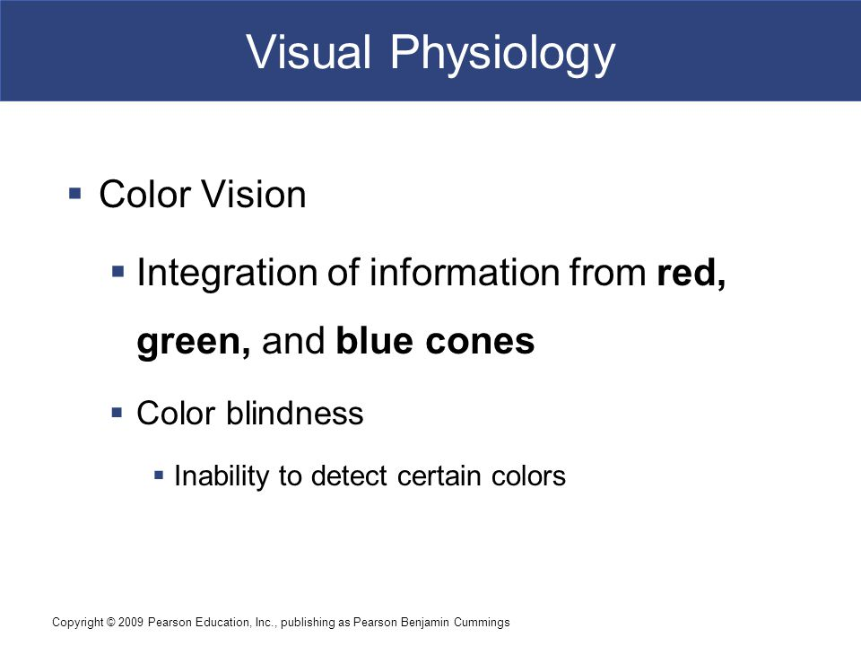 Copyright © 2009 Pearson Education, Inc., publishing as Pearson Benjamin Cummings Figure 17–16 Visual Physiology  Color Vision  Integration of information from red, green, and blue cones  Color blindness  Inability to detect certain colors
