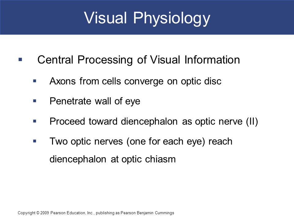 Copyright © 2009 Pearson Education, Inc., publishing as Pearson Benjamin Cummings Visual Physiology  Central Processing of Visual Information  Axons from cells converge on optic disc  Penetrate wall of eye  Proceed toward diencephalon as optic nerve (II)  Two optic nerves (one for each eye) reach diencephalon at optic chiasm