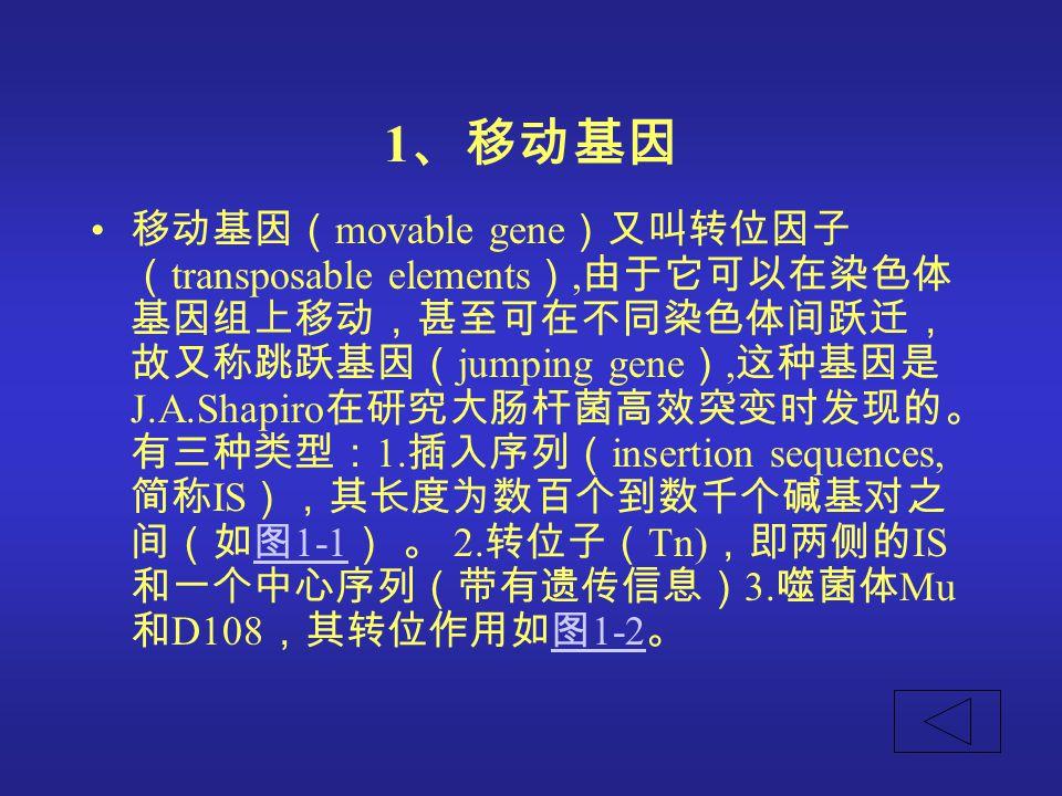 1 、移动基因 移动基因( movable gene )又叫转位因子 ( transposable elements ), 由于它可以在染色体 基因组上移动,甚至可在不同染色体间跃迁, 故又称跳跃基因( jumping gene ), 这种基因是 J.A.Shapiro 在研究大肠杆菌高效突变时发现