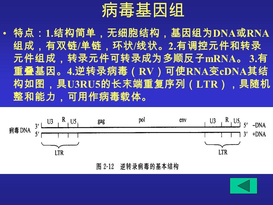 病毒基因组 特点: 1. 结构简单,无细胞结构,基因组为 DNA 或 RNA 组成,有双链 / 单链,环状 / 线状。 2. 有调控元件和转录 元件组成,转录元件可转录成为多顺反子 mRNA 。 3. 有 重叠基因。 4. 逆转录病毒( RV )可使 RNA 变 cDNA 其结 构如图,具 U3RU